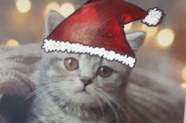 A Christmas kitten on our cat calendar