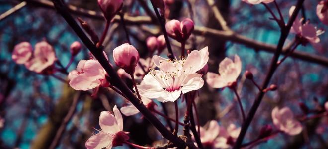 springpress-background
